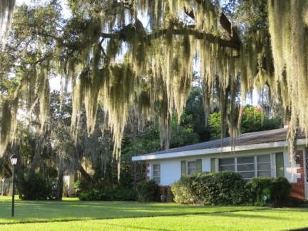 Spanish moss hanging from trees is pretty